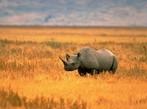Кения - Сафари Кифару