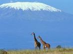 Кения - Сафари Килиманджаро
