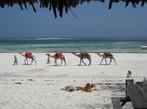 Кения Сафари и почивка на Индийския океан