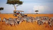 Сафари и почивка на Занзибар